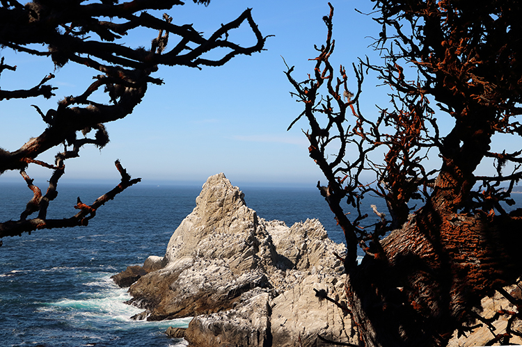 Point Lobos ocean